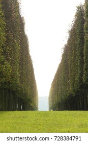 Palace of Versailles garden in the paris for your travel concept