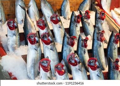 Palamut - Fresh bonito fish in the market