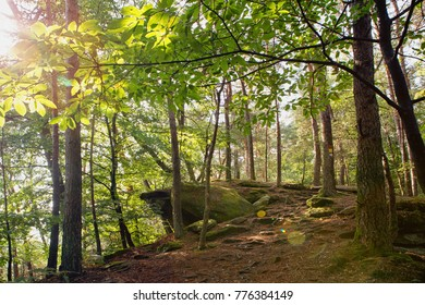 Palatinate forest in summer