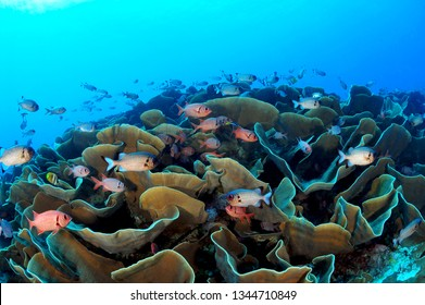 palau underwater image