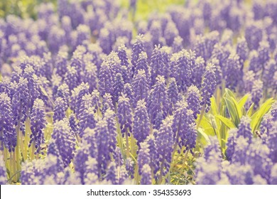 pale background of the many flowers that bloom in purple filter