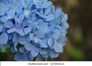 Pale blue and lilac flowers