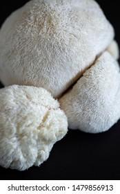pale lion's mane mushrooms, macro lion's mane fungus, Hericium erinaceus, exotic mushrooms, edible fungus