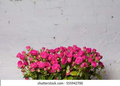 pale pink shrub roses on white Brick wall