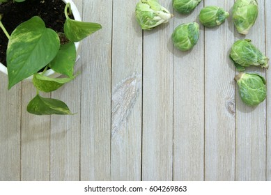 Pale slatted wood surface or desk from a top down ariel view perspective and a potted house plant vine in the corner.