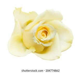 White and pale yellow flowers images stock photos vectors pale yellow rose isolated on white mightylinksfo Choice Image