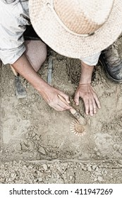 Paleontologist working in the field, recovering ancient ammonite fossil