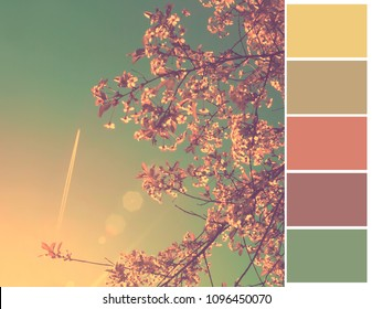 Pallet of colors. Cherry blooming at spring. Harmonious combination of colors. Color theory and mixing.