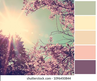 Pallet of colors. Nature background. Harmonious combination of colors. Color theory and mixing.