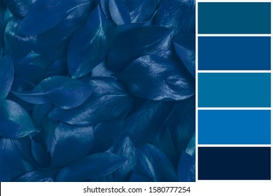Pallete of colors. Abstract background Wallpaper Creative layout made of  dark blue color leaves. Flat lay. Nature concept. Harmonious combination of colors. Color theory and mixing.