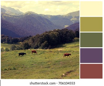 Pallete of colors. Color theory and mixing.