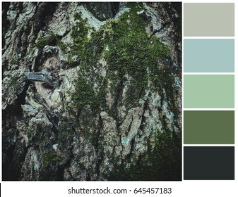Pallete of colors. Green moss on the tree. Harmonious combination of colors. Color mixing.