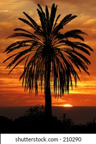Palm against a setting sun...