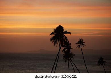 Palm against the sunset over the sea