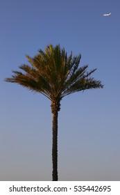 palm airplane