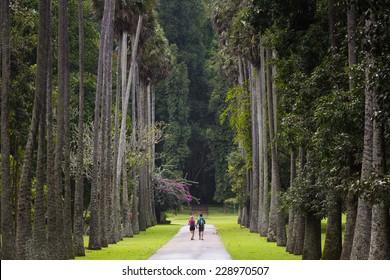 Palm alley in botanical garden Peradeniya. Kandy, Sri Lanka.