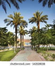 Palm alley in Eilat city - famous resort city in Israel