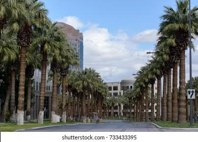 Palm alley. Las Vegas. Nevada. USA
