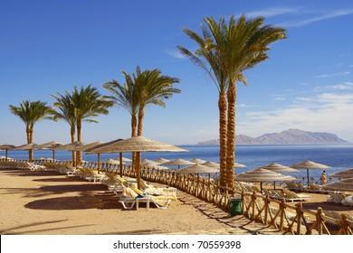Palm alley on egyptian  beach