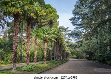 Palm alley in the park in Gurzuf, Crimea