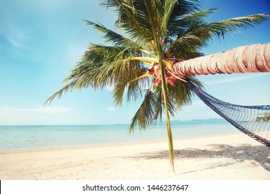 PALM BACKGROUND/ BEACH PALM VEIW
