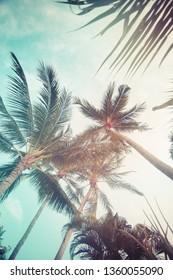 palm background in vintage color