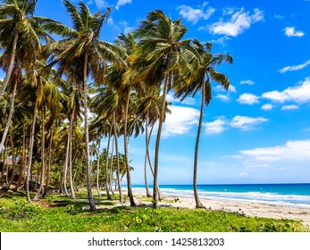 Palm beach in the Dominican Republic