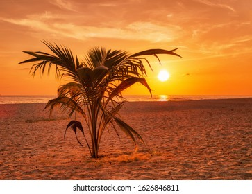 Palm at beach on sunset background. Thailand