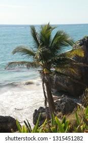 Palm beach in Tulum, Mexico.