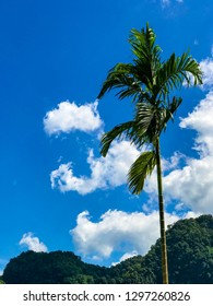 Palm beautiful and skyblue
