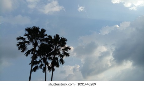 The palm is a black silhouette with a sky background.