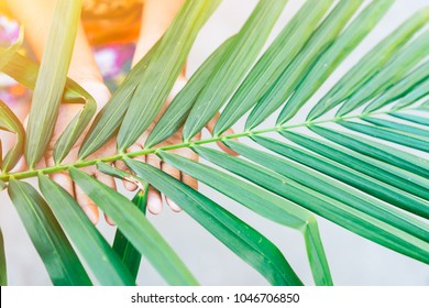 Palm branch in boy hand in palm sunday for welcome Jesus come in Jerusalem.palm sunday background and easter concept.