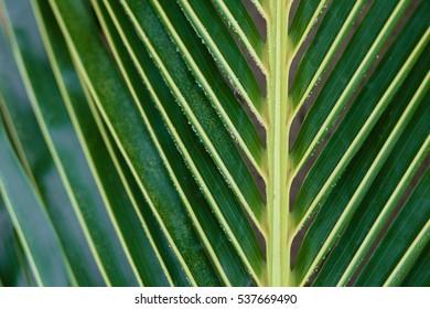 Palm branch Palm leaf close-up