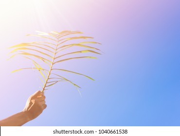Palm branch in man hand on the blue sky in palm sunday for welcome Jesus in Jerusalem.background and easter concept.