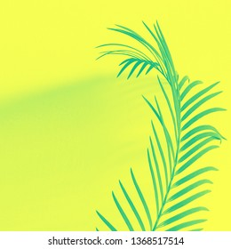 Palm branch and shadow on Yellow background. Vibrant Neon Colors.