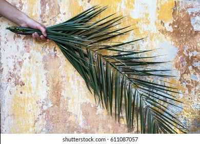 Palm branch in woman hand and beautiful old vintage cracked orange paint wall as a palm sunday background and exotic travel destination concept