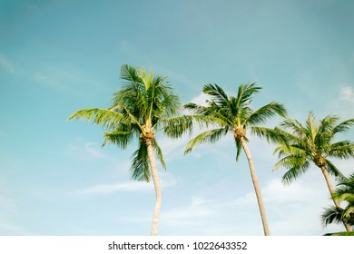 Palm Coconut beach sea sky in the summer of the holiday vintage