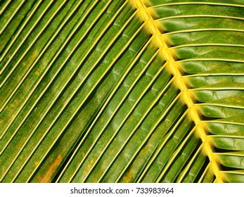 palm coconut leaf texture
