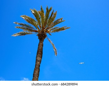 Palm coconut trees on a beautiful beach great sunny tropical vacation image