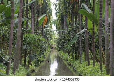 palm coconut and vegetables farm with water