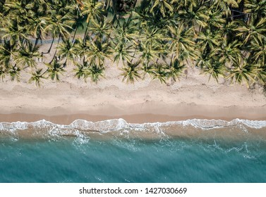 Palm cove aerial shot, palm trees white sand and turquoise sea. Near the great barrier reef Cairns.