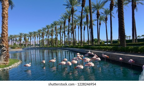 Palm Desert, CA / USA - November 8, 2018: Pink flamingos rest in the lagoon at the palm tree lined entrance to the JW Marriott Resort