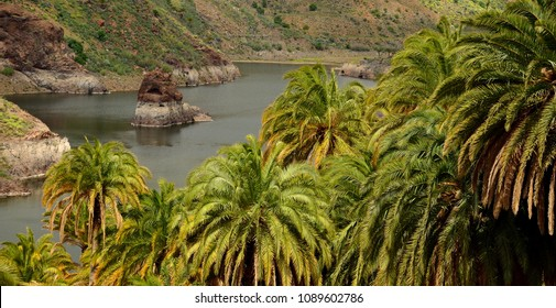 Palm forest and dam with interior rock, La sorrueda, Tirajana ravine, Canary islands