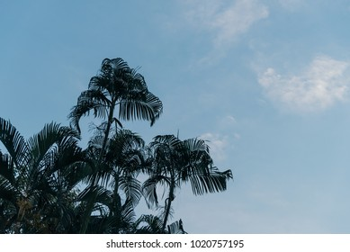 Palm forest on the leaf bottom corner with blue sky with clouds.