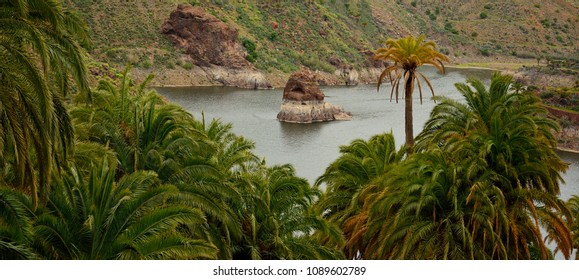Palm forest and rainwater dam, La sorrueda, Santa lucia, Gran canaria