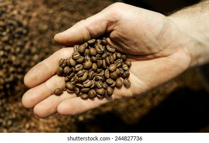 palm with freshly roasted coffee beans