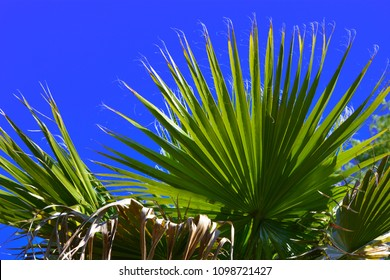 Palm Frond and Blue Sky