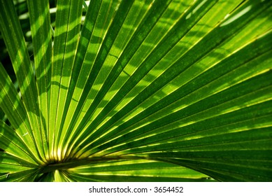 palm frond with shadows