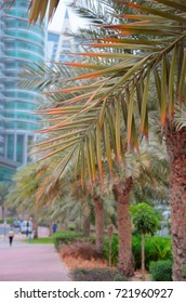 Palm fronds against the background of skyscrapers in Dubai, United Arab Emirates