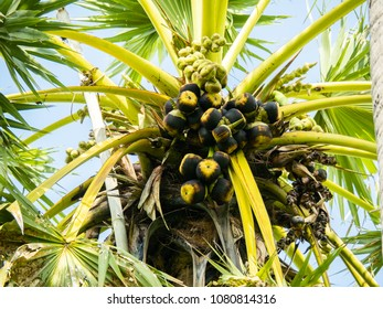 palm fruit with leaves
